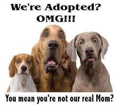 Things to Consider with Adopting a Dog