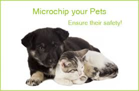 National Chip Your Pet Month