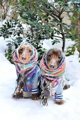 Winter Weather Safety for Your Dog